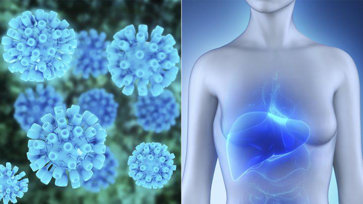 新发现的一种蛋白有望加速丙肝疫苗的研发进程