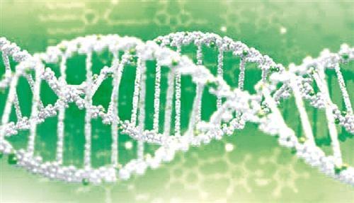 免疫调节分子可诱发淋巴瘤