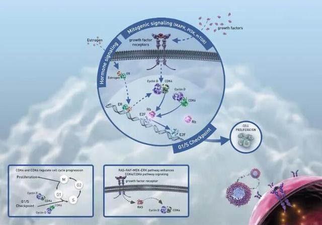 FDA支持较早使用乳腺癌新药Verzenio