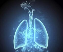 苍蝇模型确定肺癌的潜在靶向药物治疗