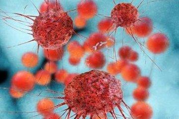 识别HER2受体的T细胞可以预防HER2 +乳腺癌复发