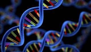 罕见的Her2突变可能并不总能刺激乳腺癌