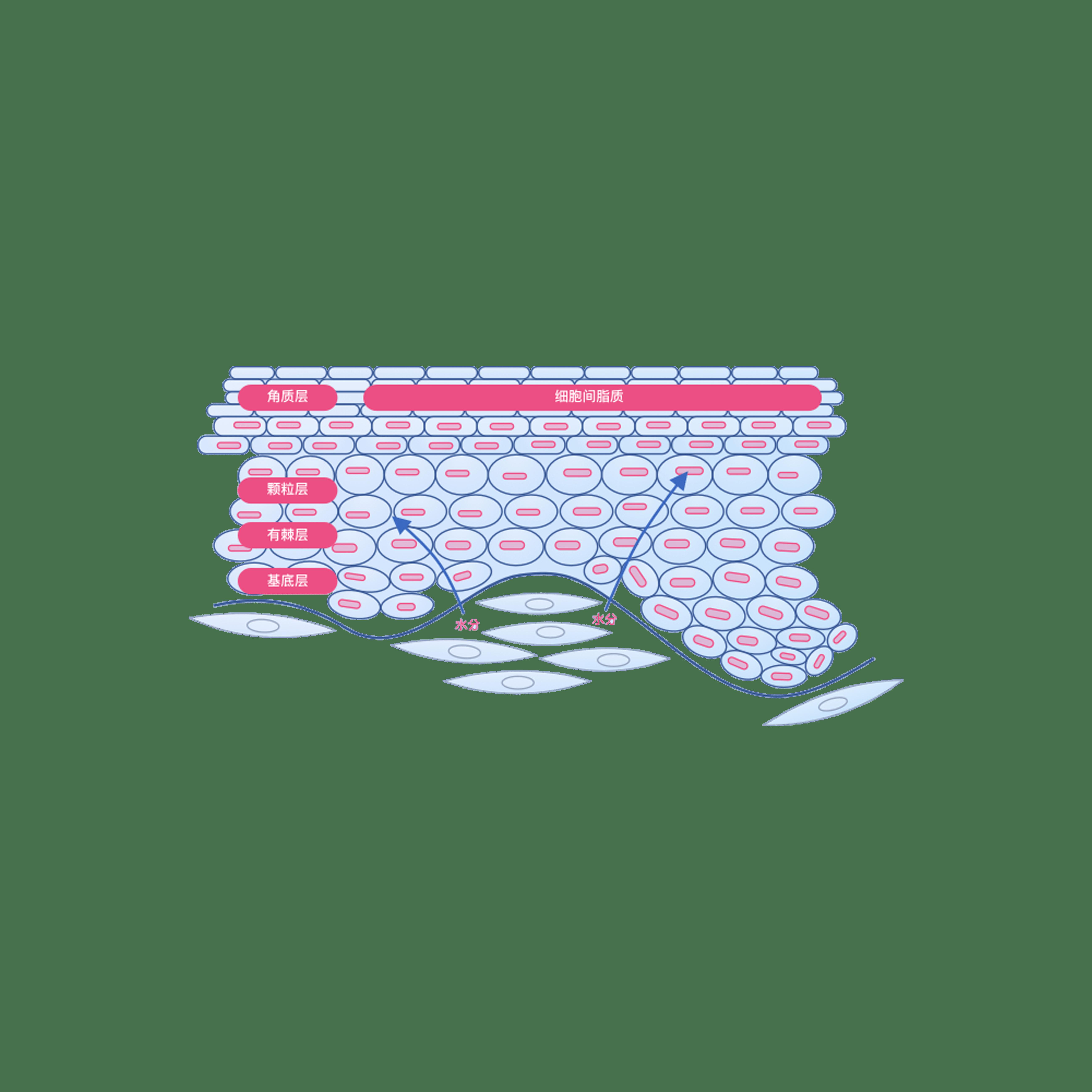【特应性皮炎】治疗中度至重度特应性皮炎(特应性湿疹)