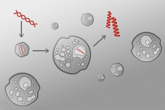 UniQure研发的B型血友病基因治疗新药临床研究达到预期目标