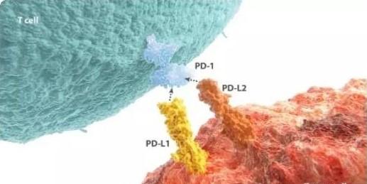 肺癌的新型组合疗法有望获得成功