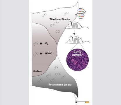 小鼠试验发现,三手烟也可增加肺癌风险
